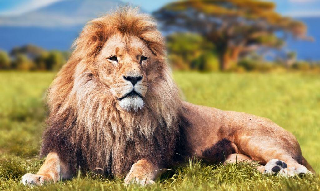 Katathym imaginative Psychotherapie, Arbeit mit dem Bild: Löwe