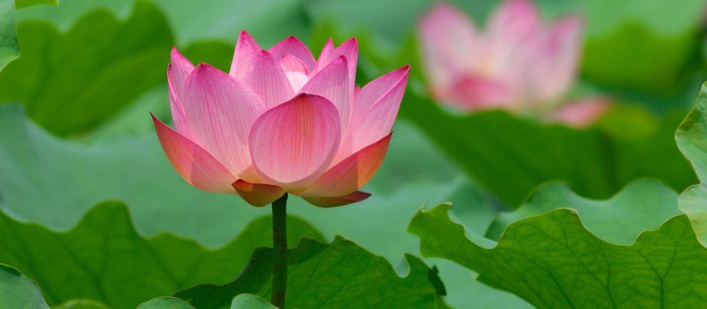 Supervision Lotus