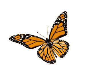 wingwave® Schmetterling